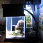 Tank with power filter refugium